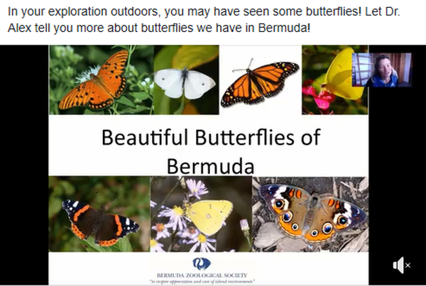 Butterfly Lecture by Dr Alex Amat Bermuda April 2020