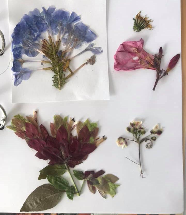 Flower Press Bermuda April 2020