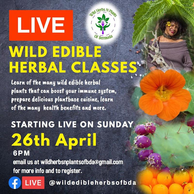 Wild Edible Herbal Classes Bermuda April 2020