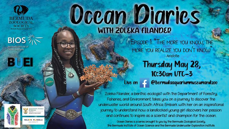 Ocean Diaries Bermuda May 2020