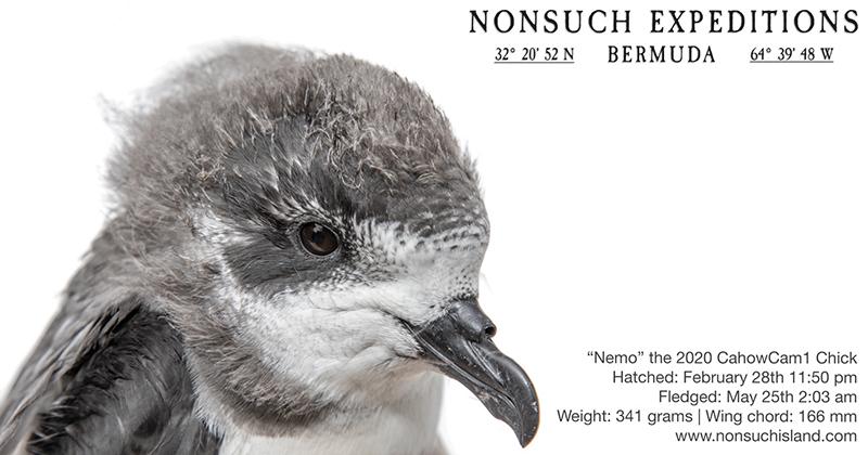 Nemo Bermuda June 1 2020