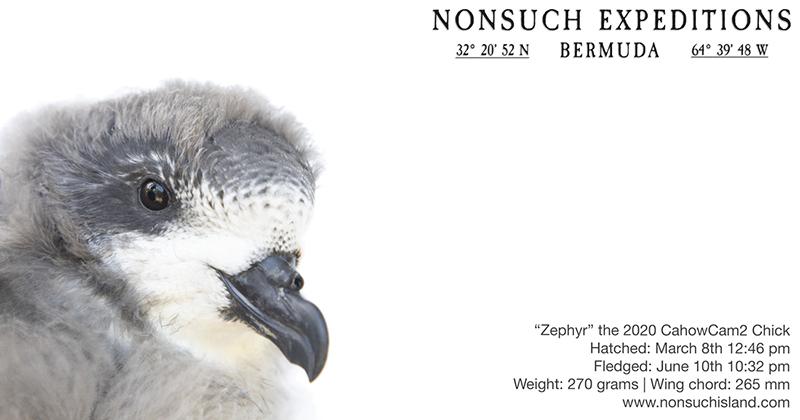 Zephyr Bermuda June 12 2020