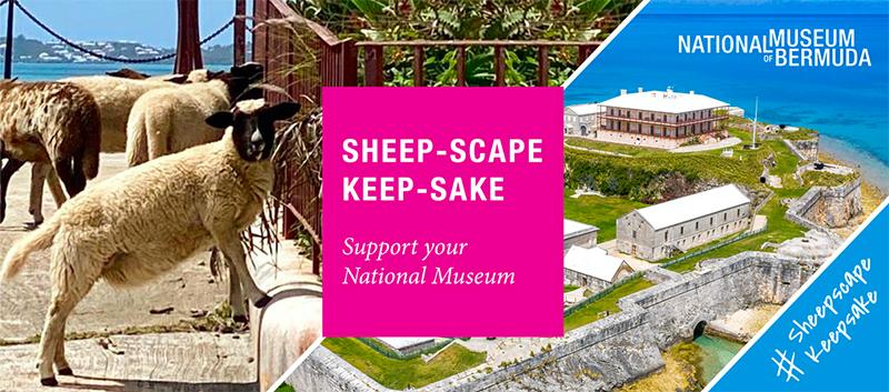 NMB Sheep-Scape Keepsake Bermuda July 2020