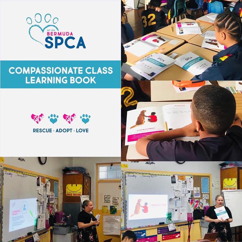 Bermuda SPCA Compassionate Class Sept 2020 (1)