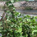 Post Hurricane Paulette Bermuda 14 2020 (1)
