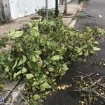 Post Hurricane Paulette Bermuda 14 2020 (26)