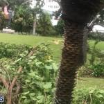 Post Hurricane Paulette Bermuda 14 2020 (5)