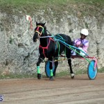 Bermuda Harness Pony Racing Season Oct 24 2020 13