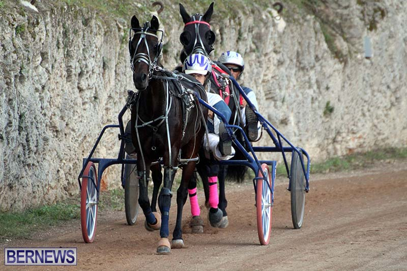 Bermuda-Harness-Pony-Racing-Season-Oct-24-2020-6