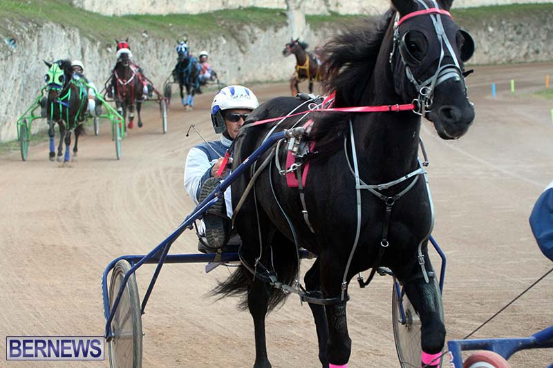 Bermuda-Harness-Pony-Racing-Season-Oct-24-2020-8
