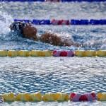 Harbor Swim Club Short Course Open Oct 24 2020 2