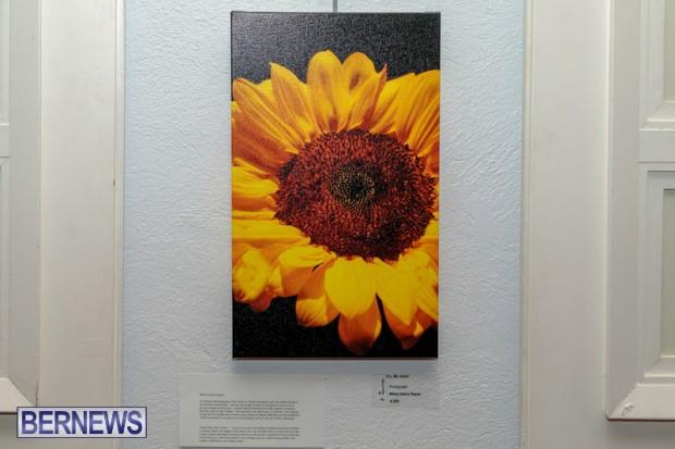Bermuda art gallery show BSOA November 13 2020 (4)
