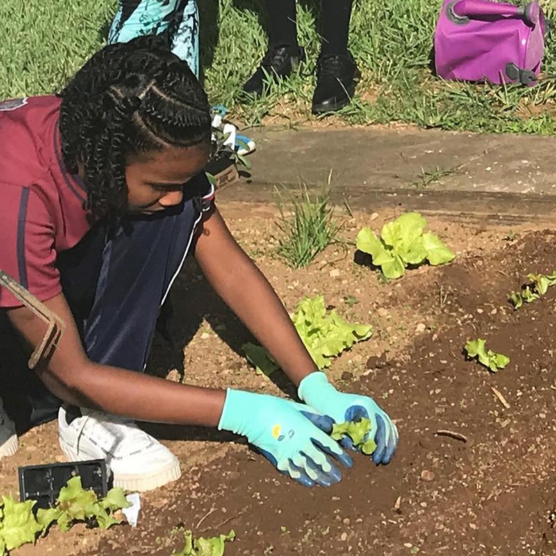 School Gardens Programme Bermuda November 2020 3