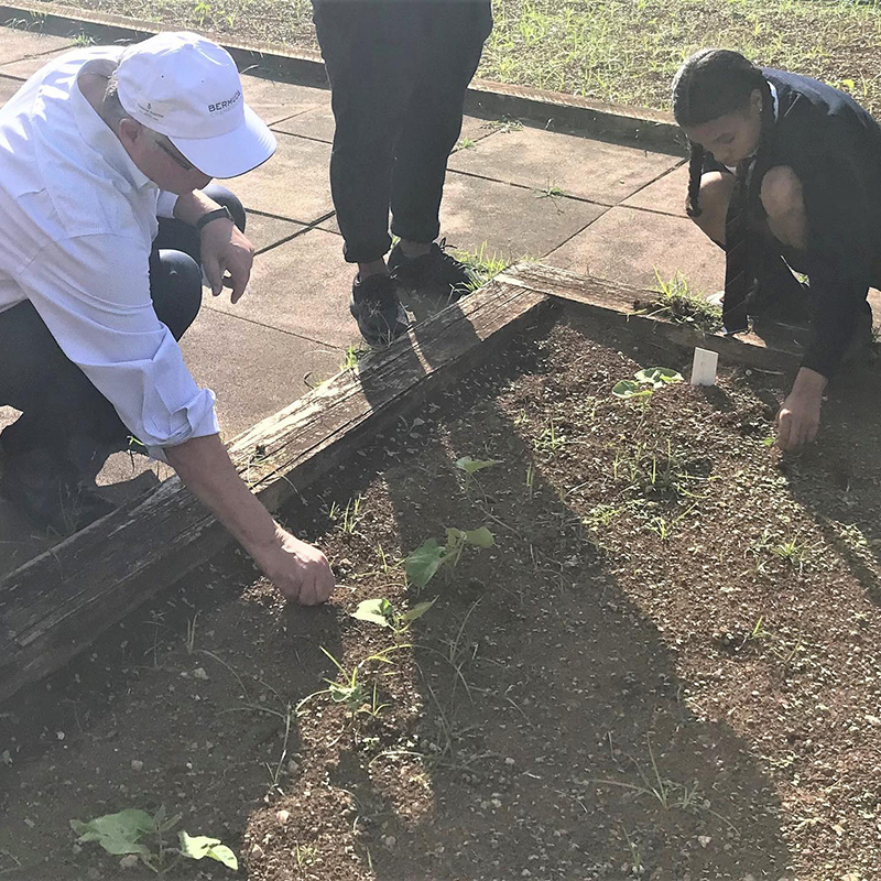 School Gardens Programme Bermuda November 2020 4