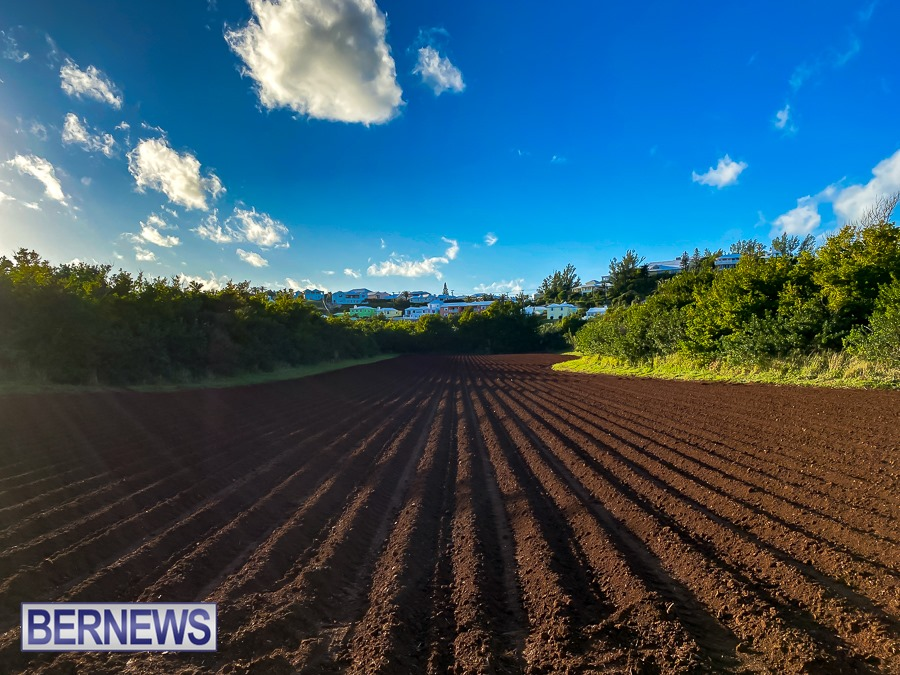 235 - There is something quite magical about the dark brown fresh ploughed soil on a Bermuda farm