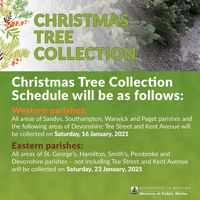 Christmas Tree Collection December 2020