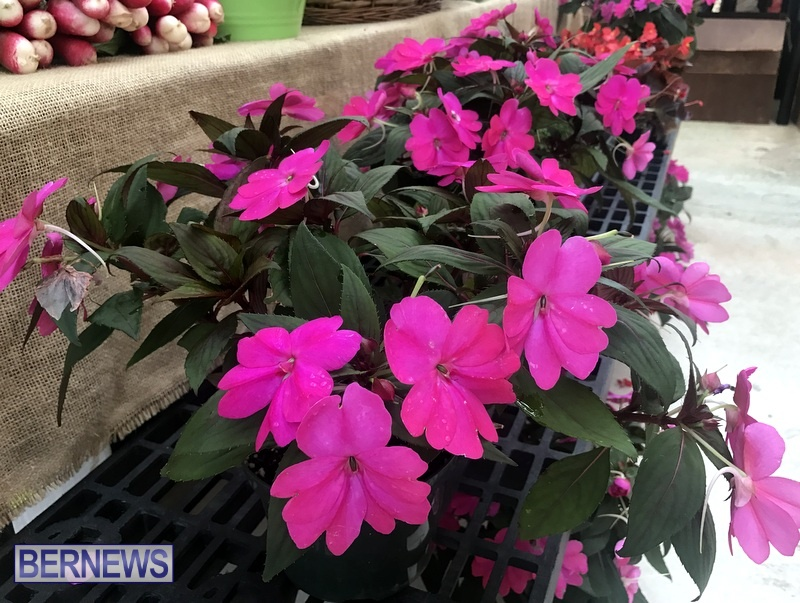 2020 Bermuda Farmers Market at Botanical Gardens Jan 4 (2)