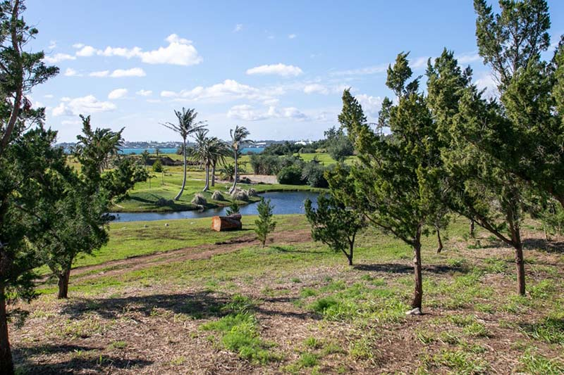 Riddell's Bay Conservation Area Bermuda Feb 2021 3