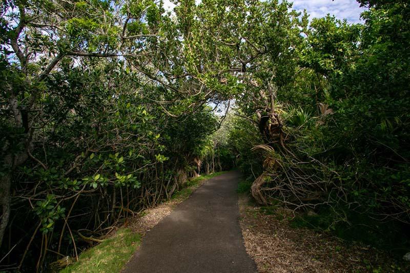 Riddell's Bay Conservation Area Bermuda Feb 2021 4