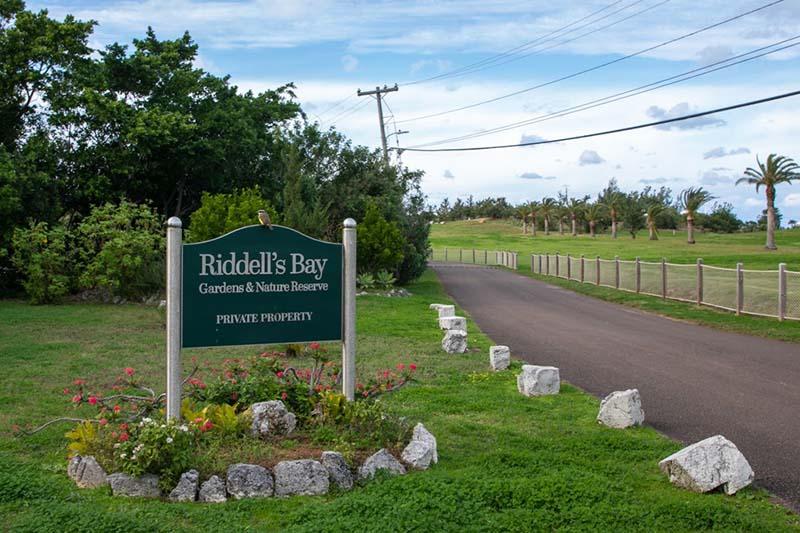 Riddell's Bay Conservation Area Bermuda Feb 2021 8