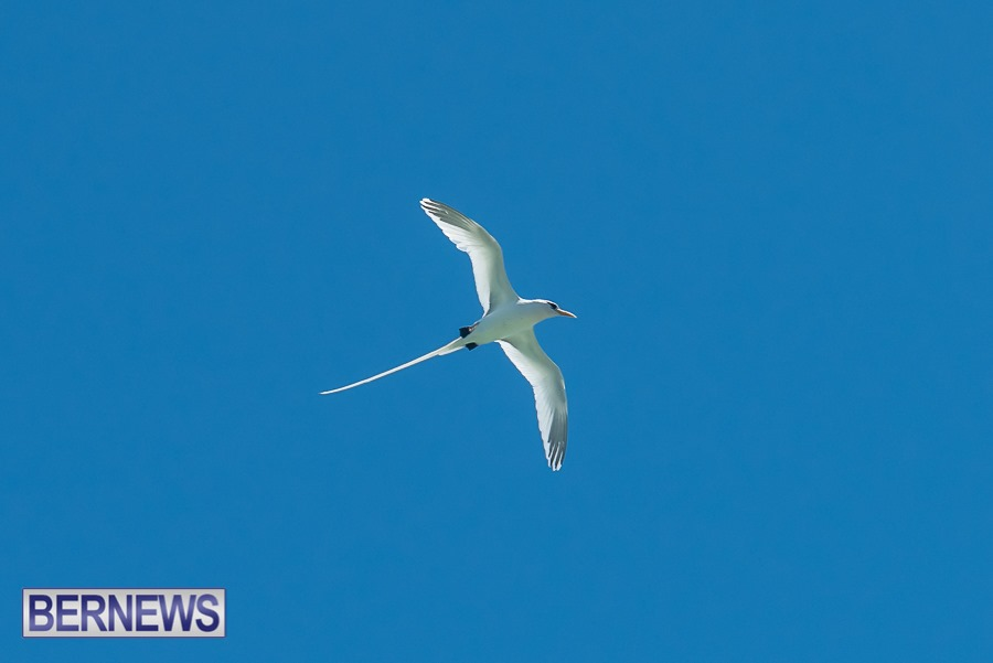 223 - Nothing quite says summer is coming than seeing these beautiful birds returning
