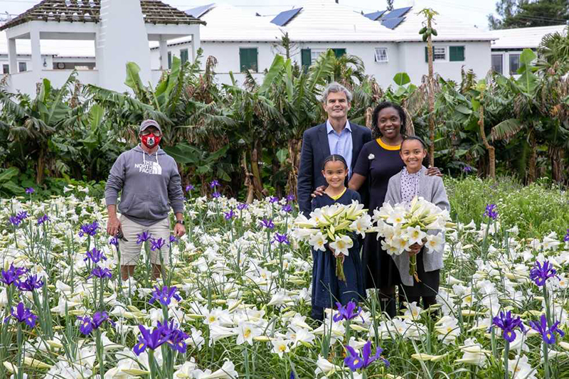 Annual Picking Of Easter Lilies Bermuda April 2021