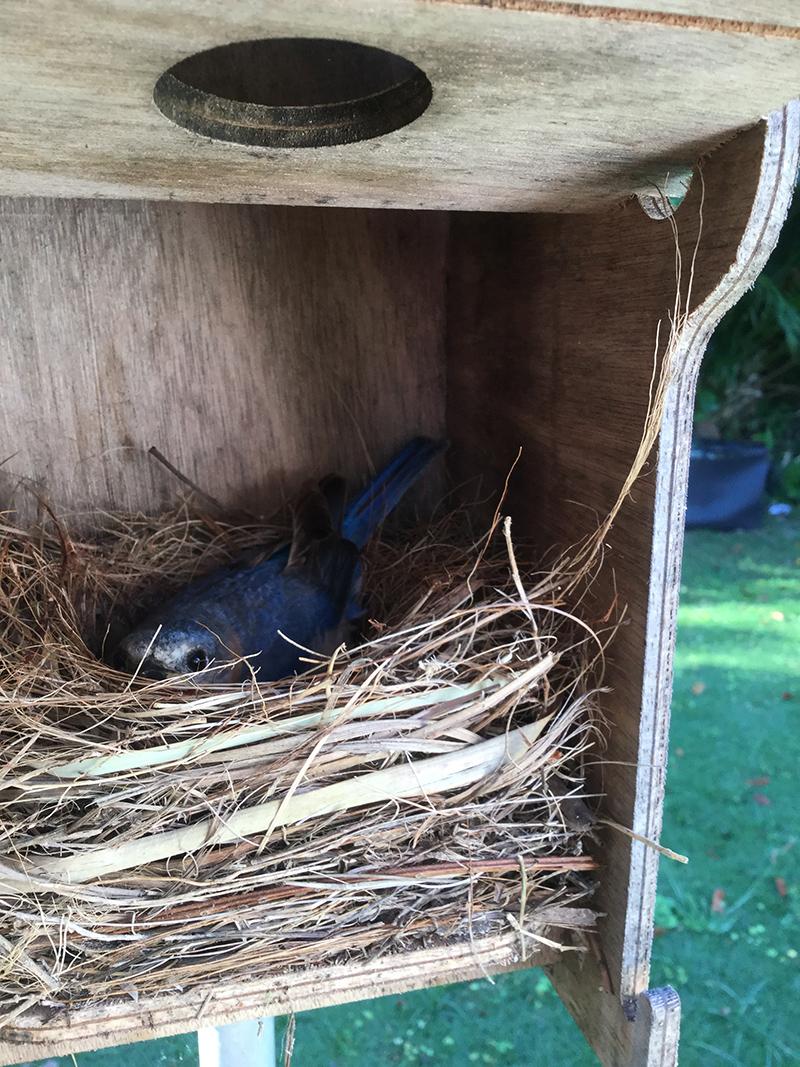 Blue Bird Bermuda April 2021 2