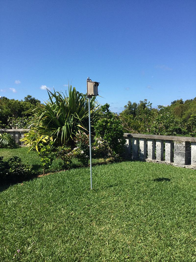 Blue Bird Bermuda April 2021 3