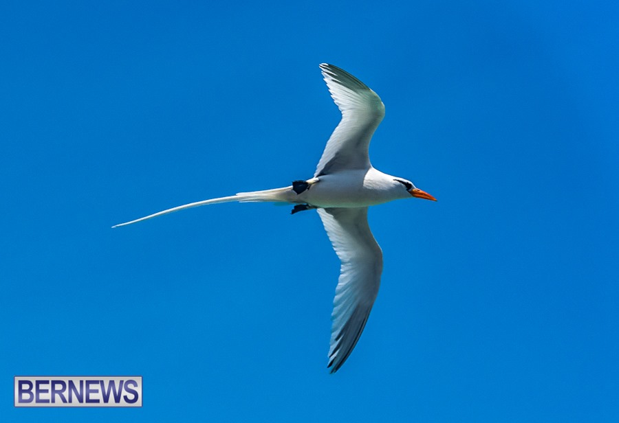 191 - Longtails are abundant this time of year letting us know summer is here