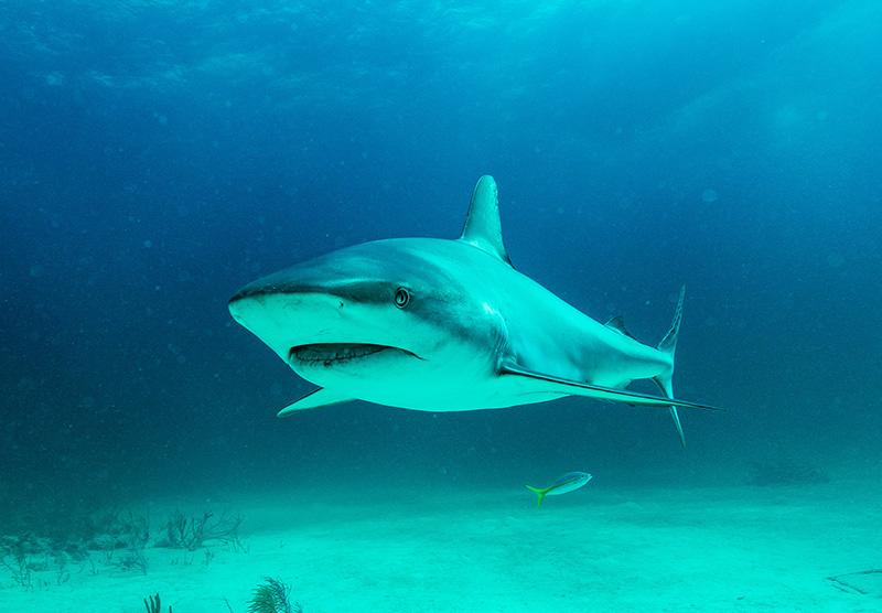 BTW SHARKWATER Shark Arena Bermuda June 23 2021