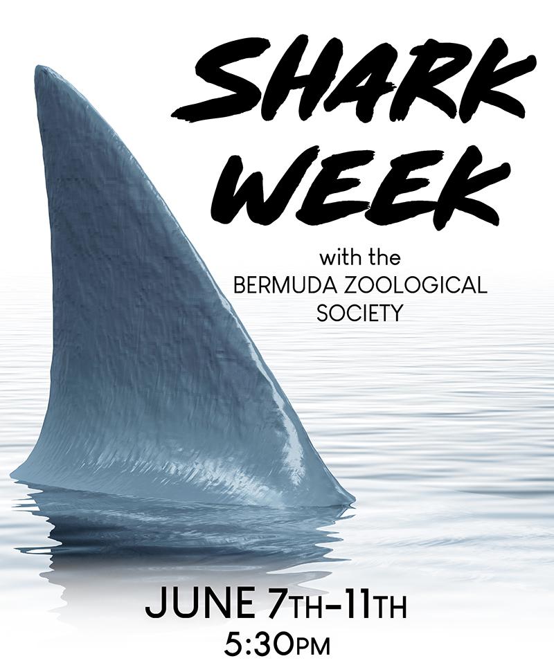 BZS Shark Week Bermuda May 2021 1