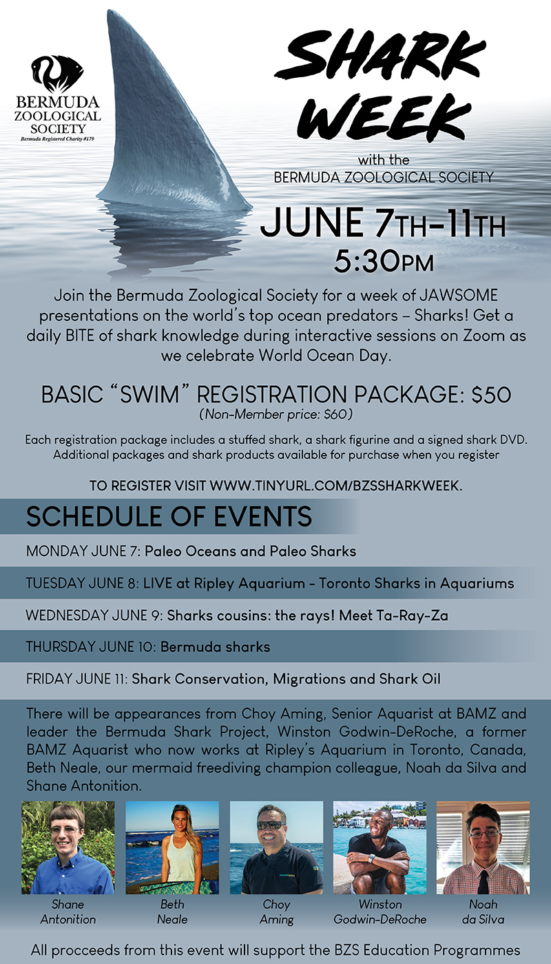 BZS Shark Week Bermuda May 2021