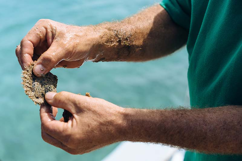 Sustainable Islands Program Bermuda June 2021 2