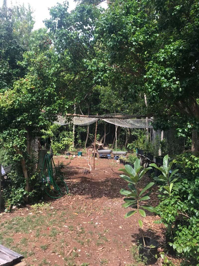 Sustainable Islands Program Bermuda June 2021 6