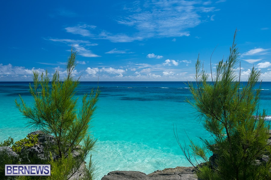 465 - A gap in the casuarina trees gives a beautiful view out to the deep blue sea