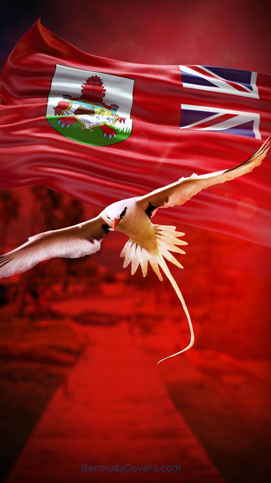 Bermuda Longtail Flag Design Phone Wallpaper 23040441 Bernews