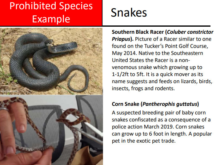 Invasive Alien Species Snakes Bermuda Aug 2021