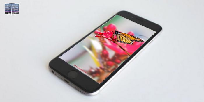 Phone wallpaper wednesday TWFB Bermuda Butterfly On Flower