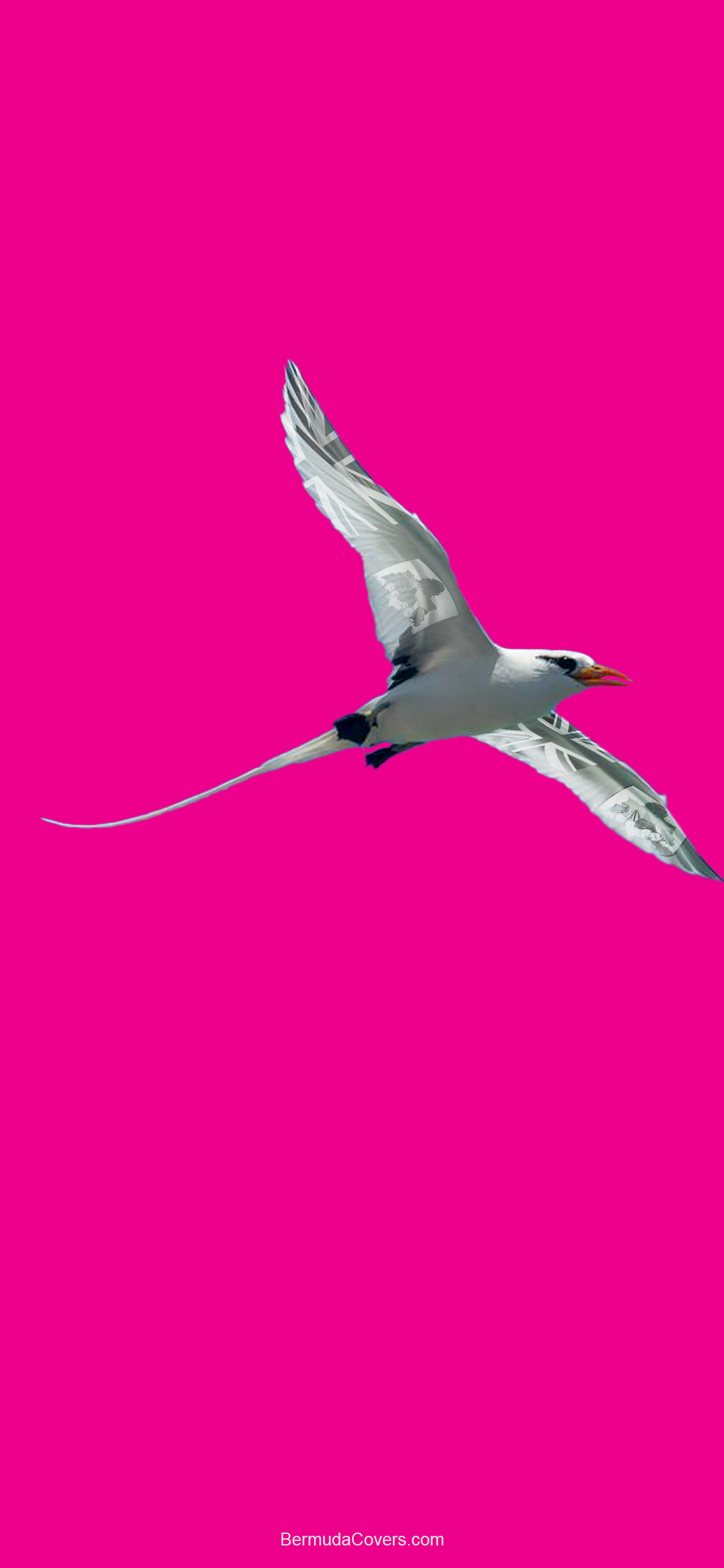 1 Longtail With Bermuda Flag Accent Pink Long Tail Bernews Mobile Phone Wallpaper Lock Dcreen Design Image Photo w29FQFCc