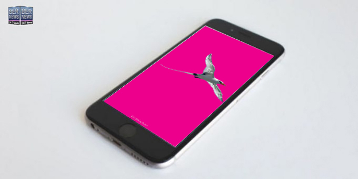 1 Phone wallpaper wednesday TWFB Longtail With Bermuda Flag Accent Pink w29FQFCc 17