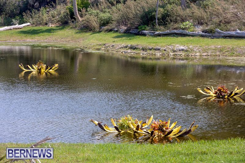 Eves Pond Bermuda sept 2021 flowers Garden Club  (10)