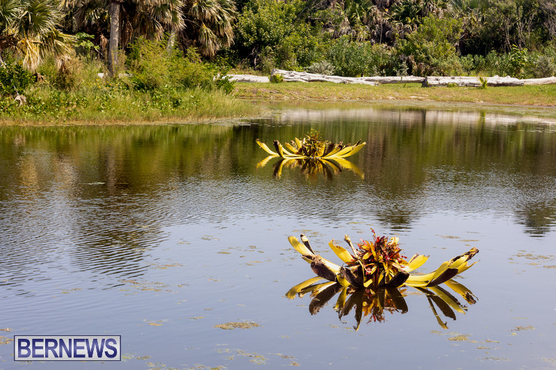 Eves Pond Bermuda sept 2021 flowers Garden Club  (13)