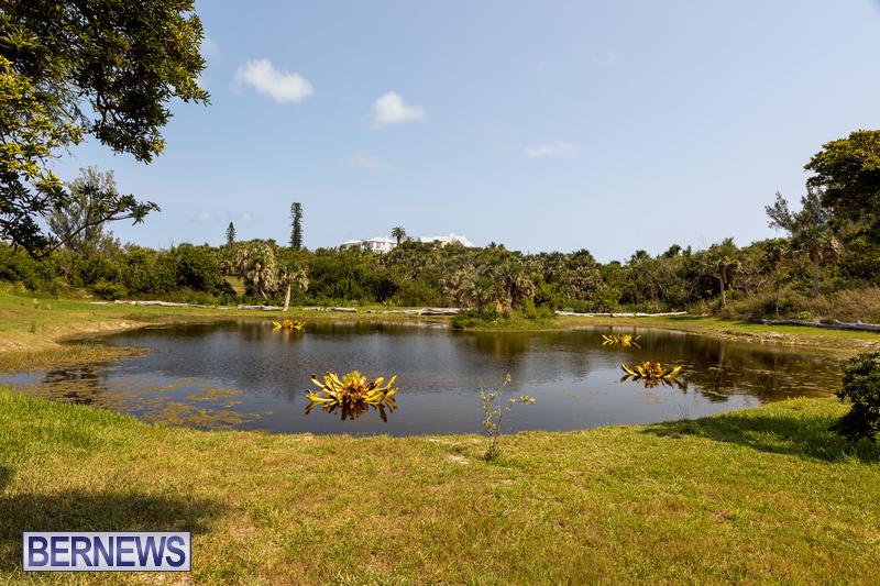 Eves Pond Bermuda sept 2021 flowers Garden Club  (19)