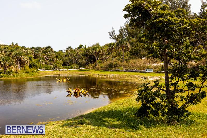 Eves Pond Bermuda sept 2021 flowers Garden Club  (20)