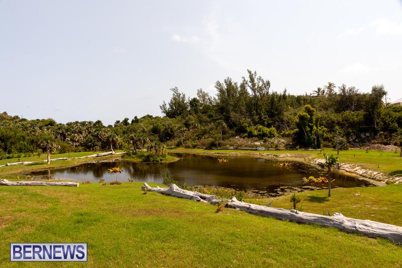 Eves Pond Bermuda sept 2021 flowers Garden Club  (21)