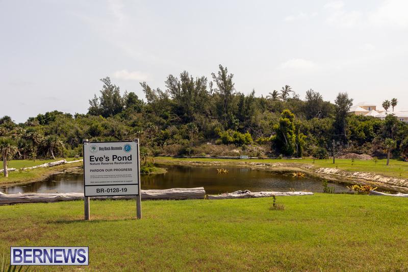 Eves Pond Bermuda sept 2021 flowers Garden Club  (22)