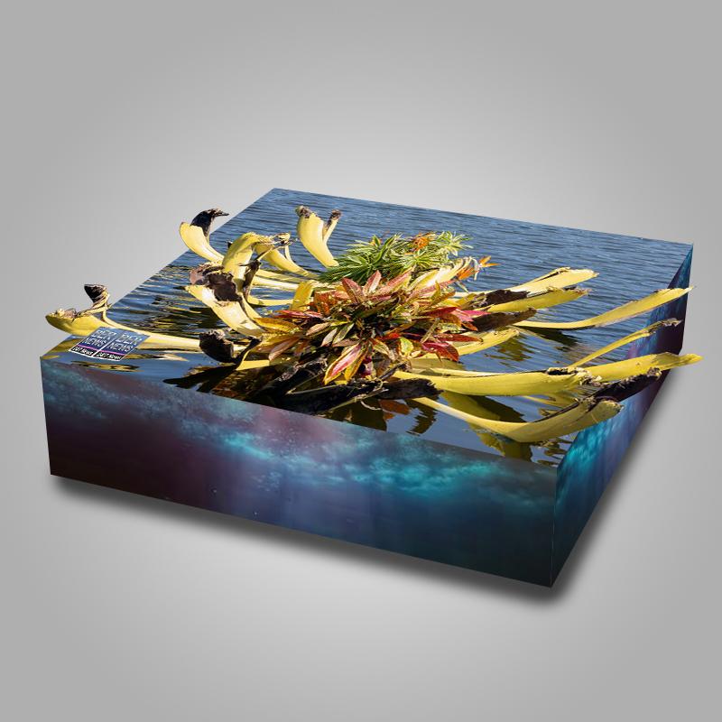 Eves Pond Bermuda sept 2021 flowers Garden Club 3d 3