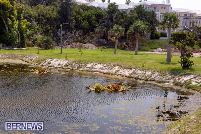 Eves Pond Bermuda sept 2021 flowers Garden Club  (4)