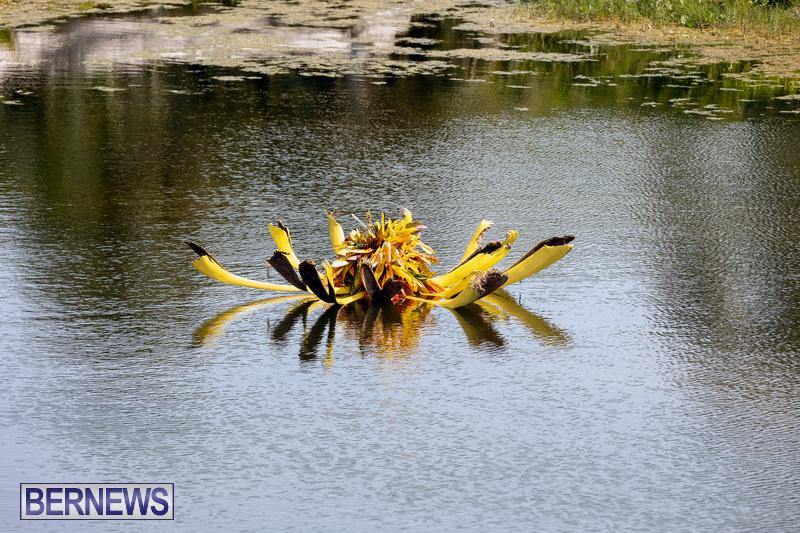 Eves Pond Bermuda sept 2021 flowers Garden Club  (5)
