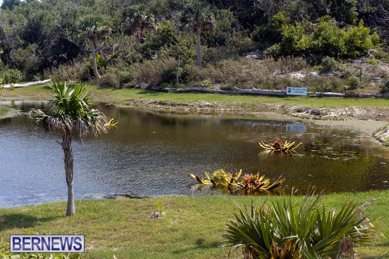 Eves Pond Bermuda sept 2021 flowers Garden Club  (9)